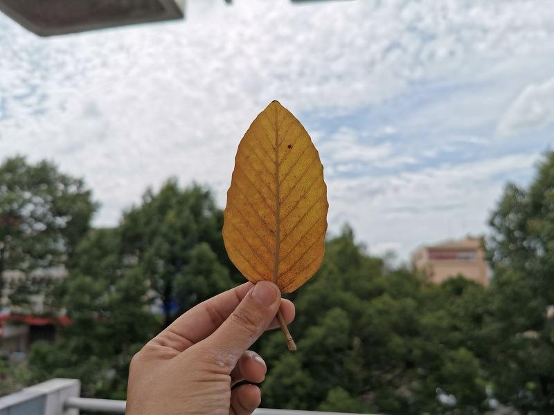 huawei p30 ảnh chụp 1