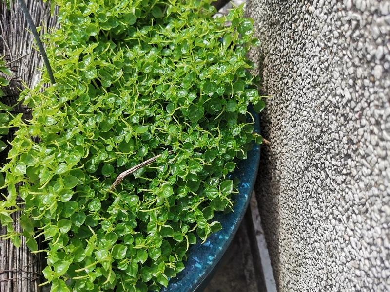 huawei p30 ảnh chụp 2
