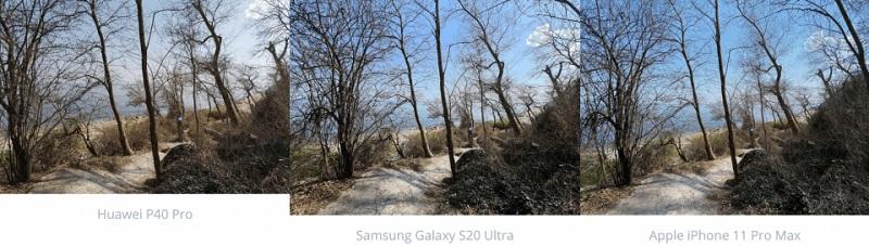 chụp ảnh rừng cây gốc rộng