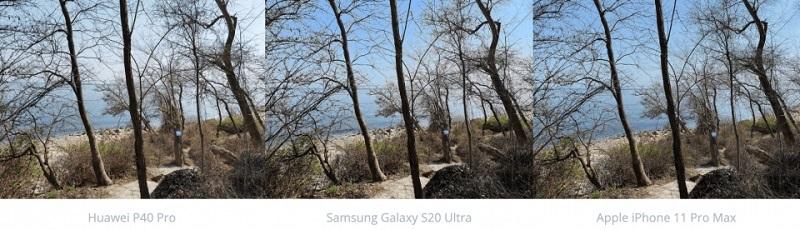 chụp ảnh rừng cây
